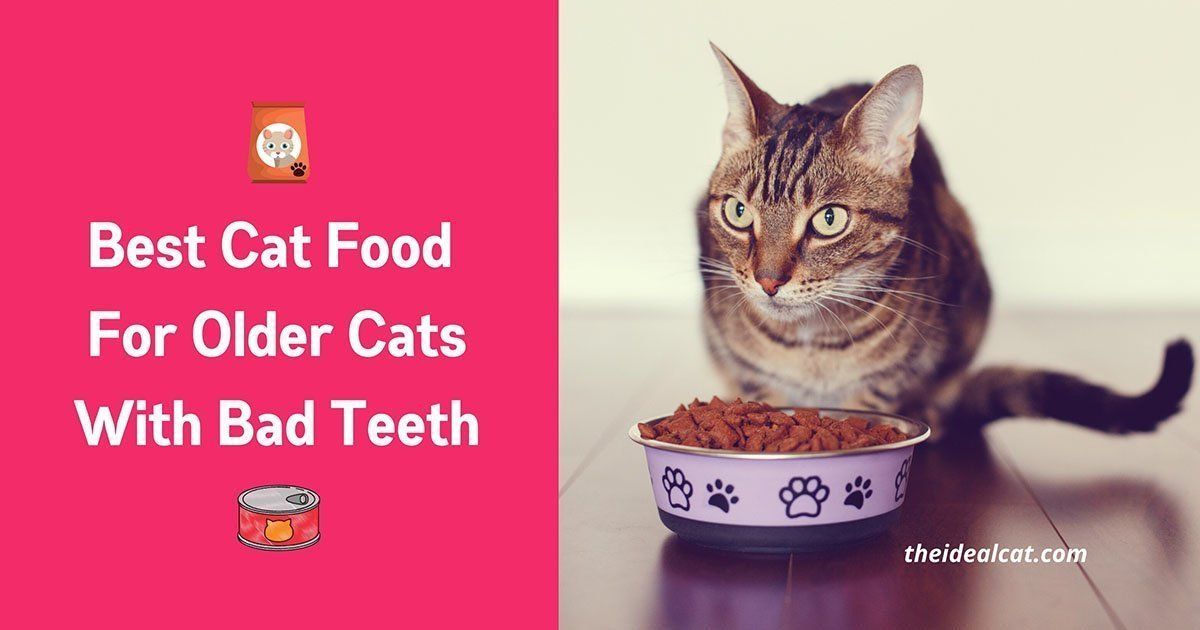 best cat food for older cats with bad teeth + no teeth + teeth problems