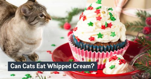 can cats eat whipped cream