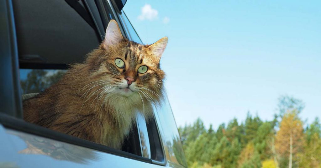 car trips on the road with your pet cat