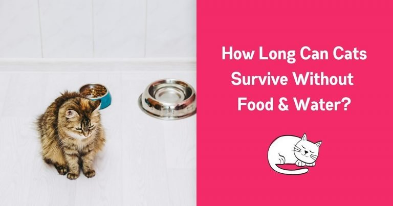How Long Can a Cat go Without Eating Food or Water 1