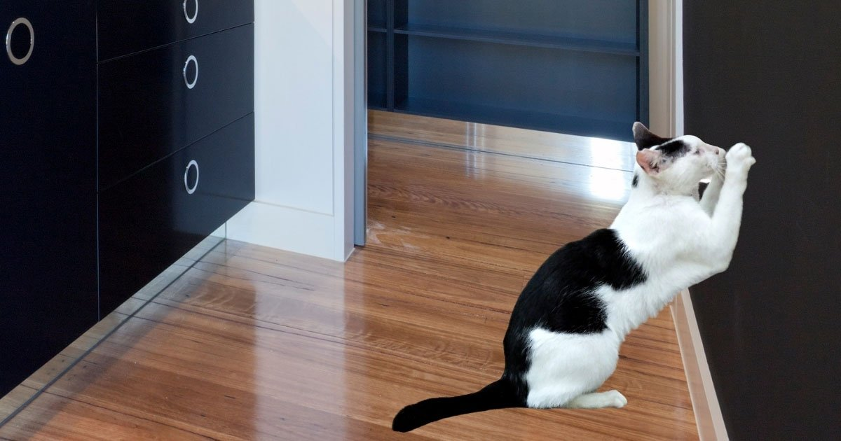 cat scratching walls - why does my cat scratch the wall