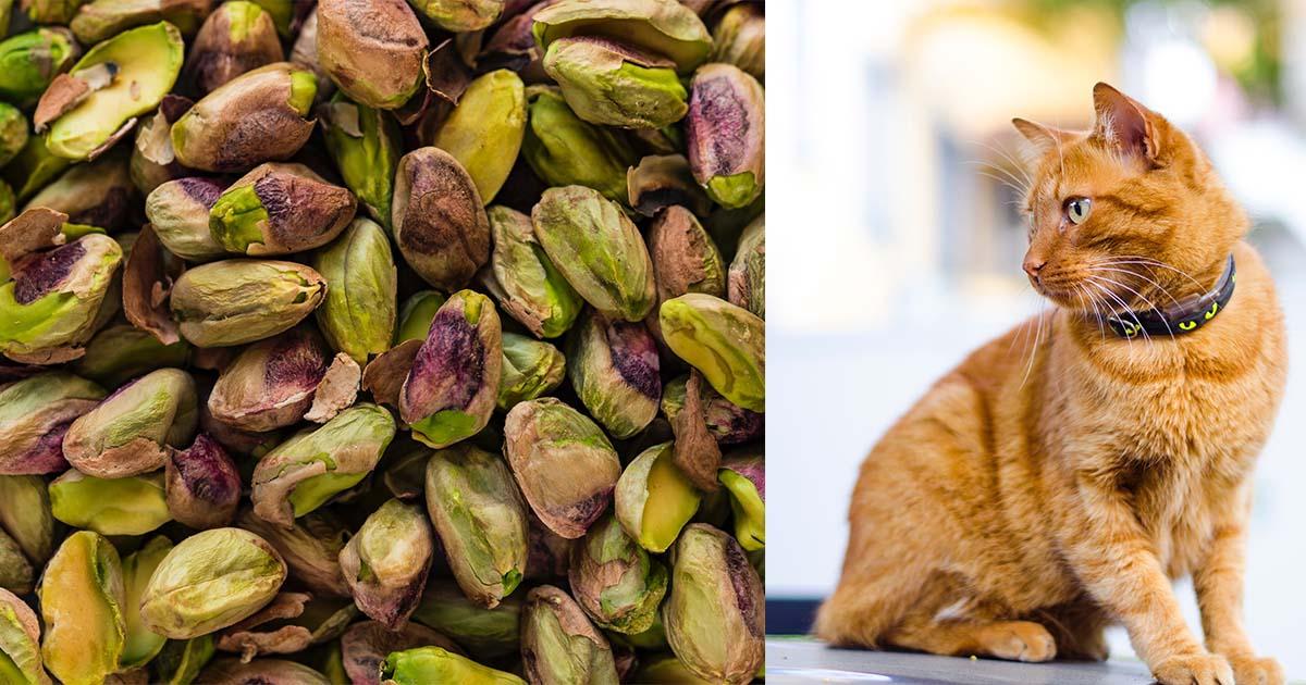 can cats eat pistachios