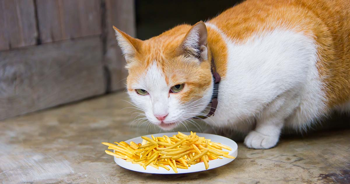 can cats eat french fries, can cats eat fries, are french fries bad for cats, can cats have french fries, cat fries