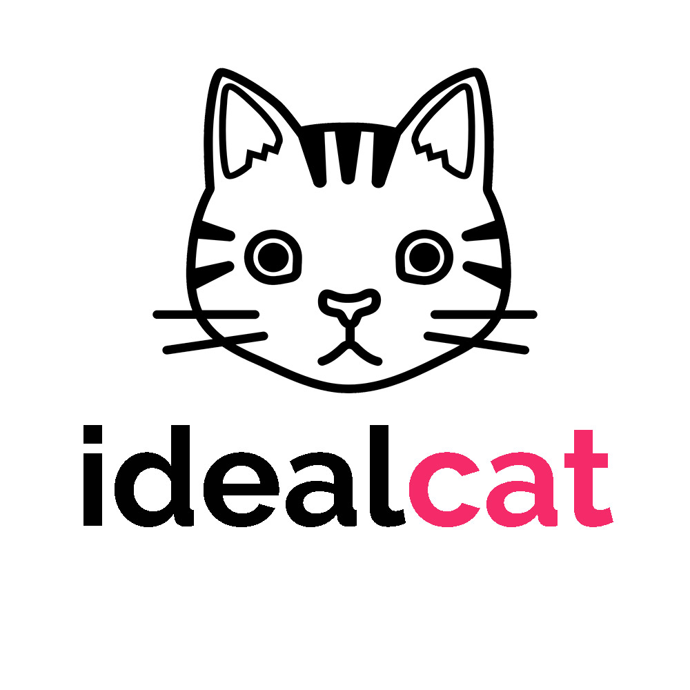 Profile picture - the ideal cat