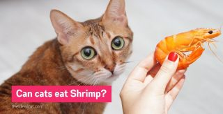 can cats eat shrimp - can cats eat raw shrimp - can cats eat cooked shrimp